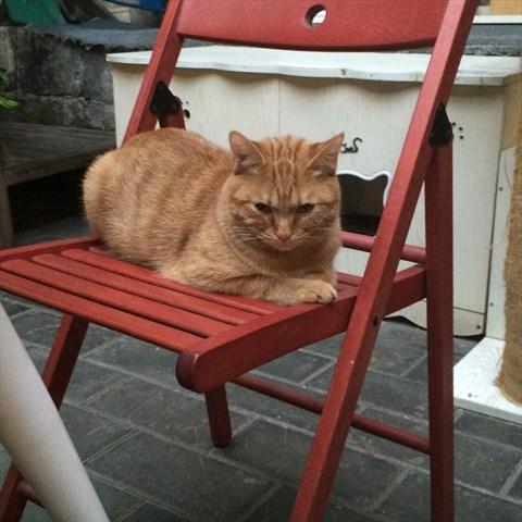萌萌哒的猫咪咖啡店